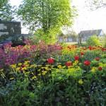 Это - не Голландия, но тюльпаны - повсюду...